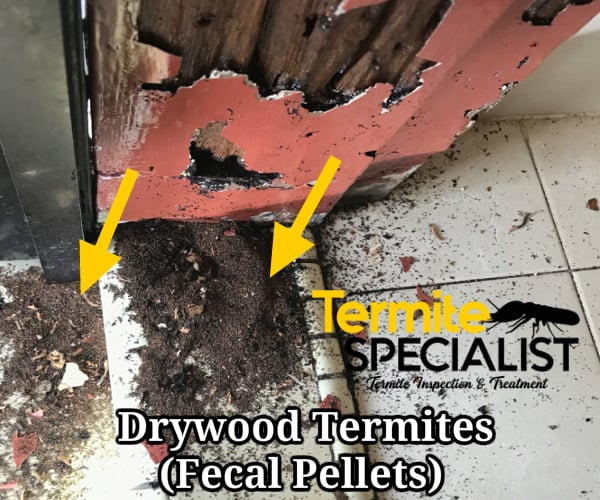 Subterranean Termite Treatment