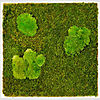 m2-Flat-Pole-Moss.jpg