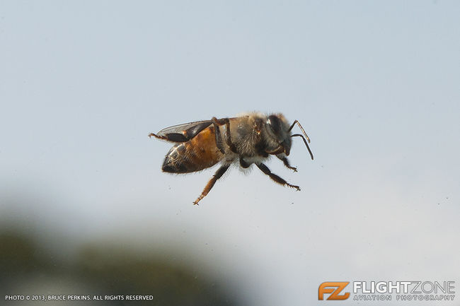 Bee at Rand